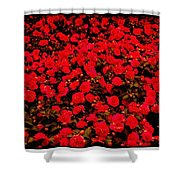 Red Impatiens Flowers Shower Curtain