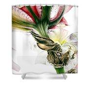 Red Iris Shower Curtain