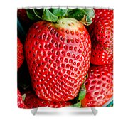 Red Juicy Delicious California Strawberry Shower Curtain