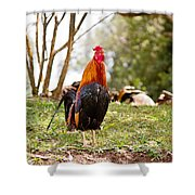 Red Jungle Fowl - Moa Shower Curtain