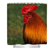 Red Jungle-fowl Shower Curtain