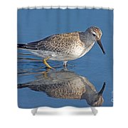 Red Knot Calidris Canutus Shower Curtain