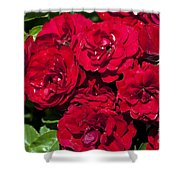 Red Lavaglut Lavaglow Floribunda Roses Shower Curtain