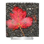 Red Leaf On Pavement Shower Curtain