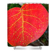 Red Leaf With Yellow Veins Shower Curtain