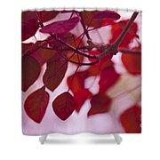 Red Leaves - Euphorbia Cotinifolia - Tropical Smoke Bush Shower Curtain