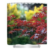 Red  And  Yellow  Leaves  Shower Curtain
