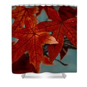 Red Leaves On The Branches In The Autumn Forest. Shower Curtain