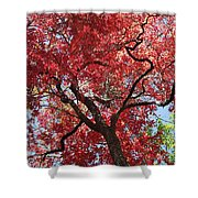 Red Leaves On Tree Shower Curtain