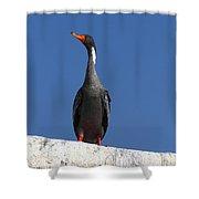 Red Legged Cormorant Shower Curtain