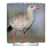 Red-legged Seriema Foraging  Pantanal Shower Curtain