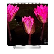 Red Lilies At Night Shower Curtain