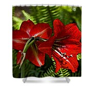 Red Lilies For Spring Shower Curtain