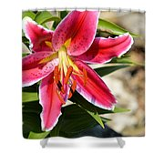 Red Lilly 8095 Shower Curtain