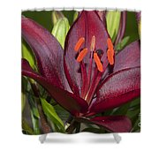 Red Lily 2 Shower Curtain