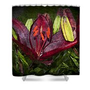 Red Lily 5 Shower Curtain