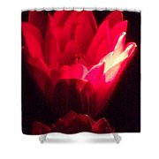 Red Lily At Night Shower Curtain
