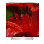 Red Lily Close Shower Curtain