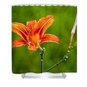 Red Lily - Featured 3 Shower Curtain