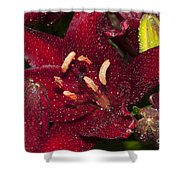 Red Lily Raindrops Shower Curtain