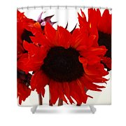 Red Lullaby No2 Shower Curtain