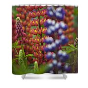 Red Lupinus Shower Curtain