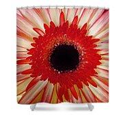 Red  Macro Daisy  Shower Curtain