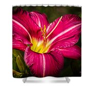 Red Magic Daylily Shower Curtain