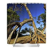 Red Mangrove Aerial Roots Shower Curtain