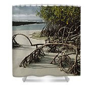 Red Mangrove Root Galapagos Islands Shower Curtain