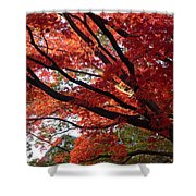 Red Maple 01 Shower Curtain