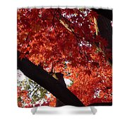 Red Maple 02 Shower Curtain