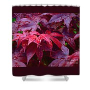 Red Maple After Rain Shower Curtain
