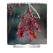 Red Maple Flowers Shower Curtain