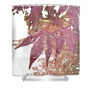 Red Maple Kissed By Water Shower Curtain