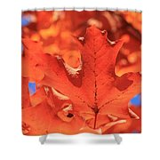 Peak Color Maple Leaves Shower Curtain