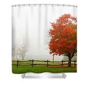 Red Maple Tree And A Split-rail Fence Shower Curtain