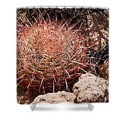 Red Mohave Barrel Cactus Shower Curtain