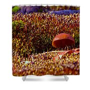 Red Mushroom Inn Shower Curtain