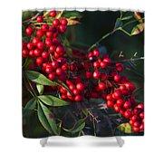 Red Nandina Berries - The Heavenly Bamboo Shower Curtain