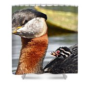 Red-necked Grebe And Chick Shower Curtain