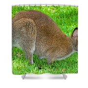 Red Necked Wallaby Shower Curtain