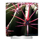 Red Needles On Barrel Cactus Shower Curtain