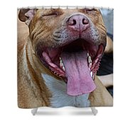 Red Nose Pit Bull Terrier Shower Curtain