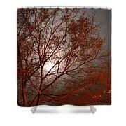 Red Oak At Sunrise Shower Curtain