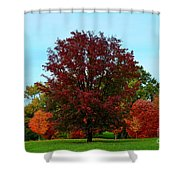 Red Oak In Loose Park Shower Curtain