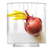 Red Onion With Sprout Shower Curtain