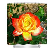 Red Orange And Yellow Rose Shower Curtain