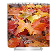 Red Orange Autumn Leaves Art Prints Shower Curtain