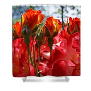 Red Orange Roses Art Prints Floral Photography Shower Curtain
